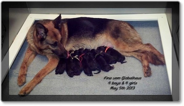 Fina's puppies are born! 05/06/2013