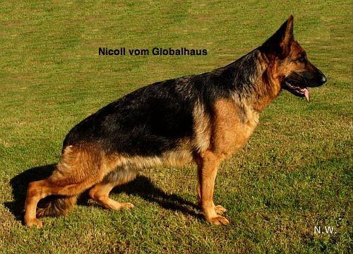 Nicoll vom