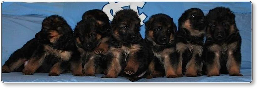 Our Carolina Blue babies from Anta and Mailo are now four weeks old 4 11 2014