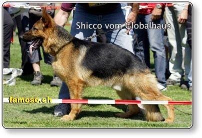 Shicco
