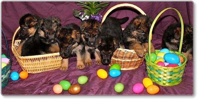 Globalhaus Easter Egg Hunt