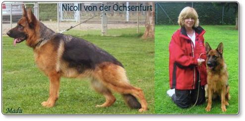 Nicoll Kloud