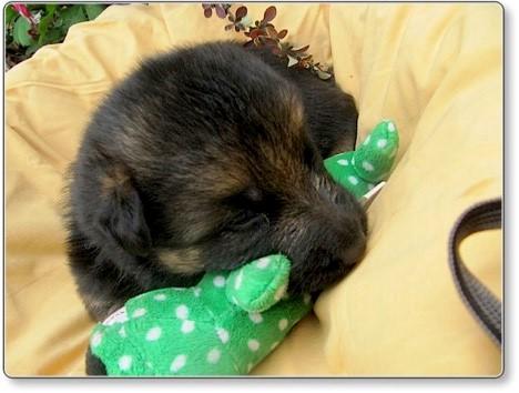 Puppies at 3 weeks 3