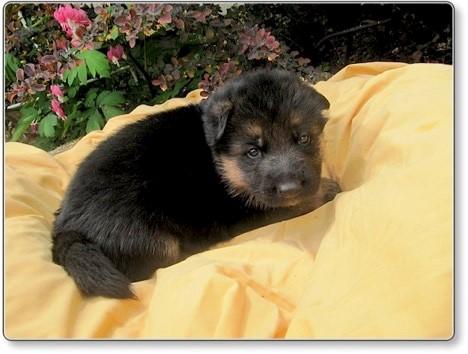 Puppies at 3 weeks 4