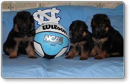 Puppies at 4 weeks old 2
