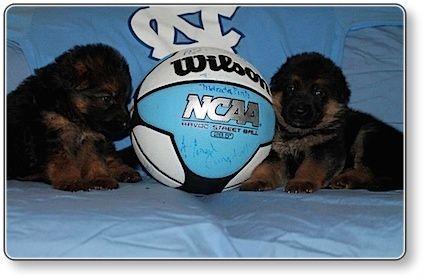 Puppies at 4 weeks old 3