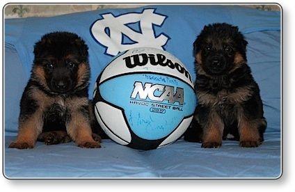 Puppies at 4 weeks old